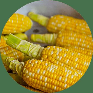 vegan BCAA Pulver aus Mais - ProFuel Alphaminos BCAA