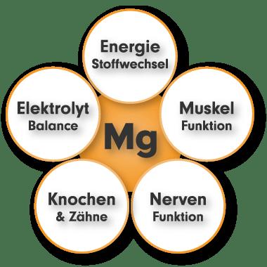 Magnesium Komplex - Aufgaben, Funktion, Wirkung