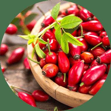 MSM Methylsulfonylmethan + natürliches Vitamin hochdosiert aus Hagebutten