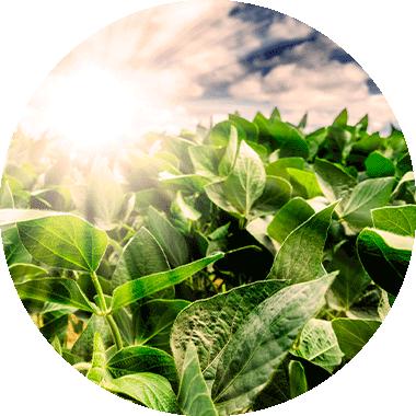 Veganes Protein-Pulver - Vegan Protein 4K Blend - natürlich & nachhaltig