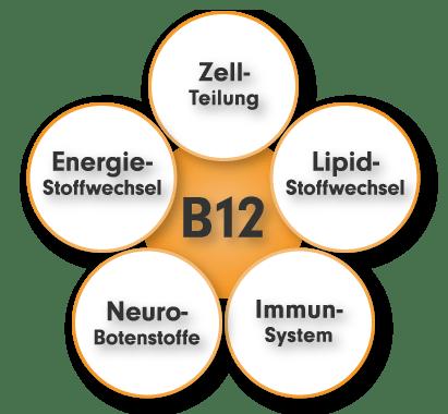 Vitamin B12 Aufgaben und Funktion