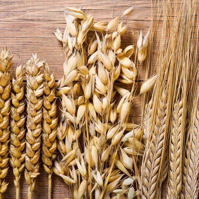 Protein aus Getreide und Ölsaaten