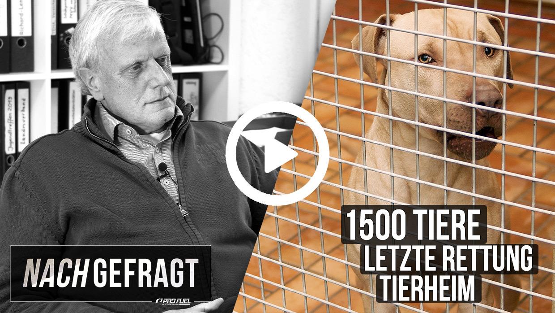 Nachgefragt: ProFuel zu Gast im Tierheim Mannheim