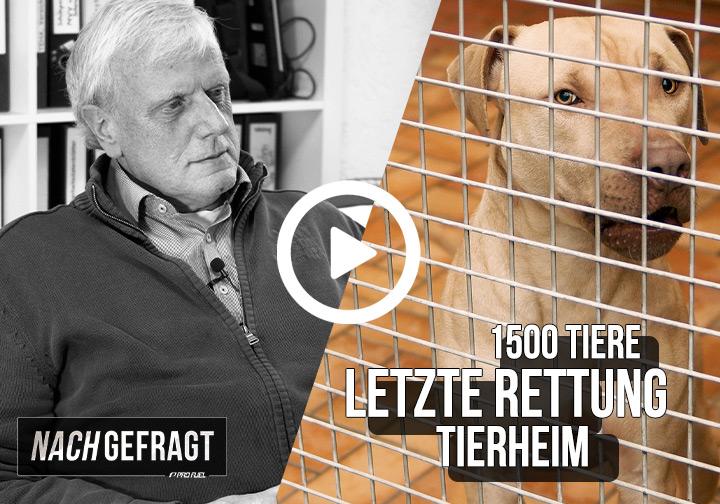 NACHGEFRAGT #2 | Letzte Rettung Tierheim - Interview mit Herbert Rückert