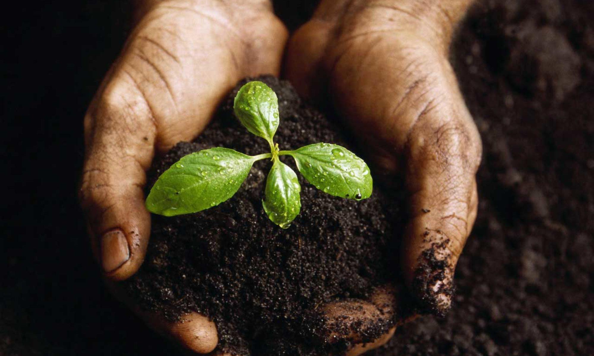 Für Jede Bestellung Pflanzen Wir 2 Bäume